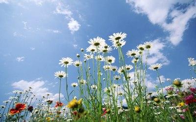 flores_y_cielo