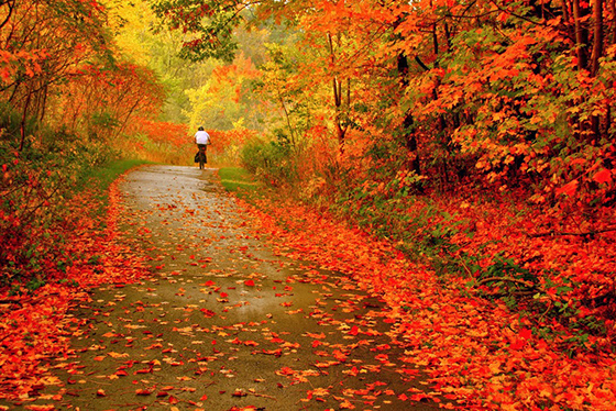 otoño 560